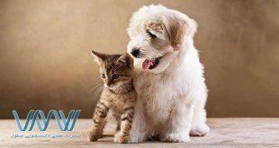 مطالعات جدید دانشگاه آلبرتا نشان میدهد که نوزادان خانوادههایی که دارای حیوان خانگی (۷۰ درصد سگ) هستند؛ سطوح بالاتری از دو نوع میکروب، Ruminococcus و Oscillospira که در ارتباط با کاهش خطرات بیماریهای آلرژیک و چاقی است را نشان میدهند…