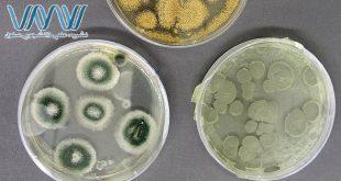 یک تیم از دانشمندان یک جزء جدیدی از سیستم دفاعی گیاه در برابر عفونت قارچی را کشف کردند