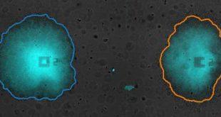 زیست شناسان دانشگاه کالیفرنیا سن دیگو، اجتماعی از باکتری هارا کشف کردند که از یک استراتژی اشتراک زمانی اجتماعی برای میلیون ها سال استفاده کرده اند