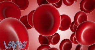 دانشمندان دانشگاه لوند سوئد موفق به درک جدیدی از چگونگی ایجاد سلول های خونی در طی تکامل انسان از سلول های اندوتلیال شدند
