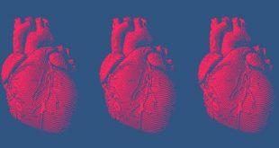 رازی از درون دریاها میتواند قلب انسان را بهطور حقیقی بازسازی کند!!! (تحقیقات که اینطور نشان میدهند!)