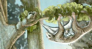 کشف ردپای پستانداران بادپَر در عصر دایناسورها