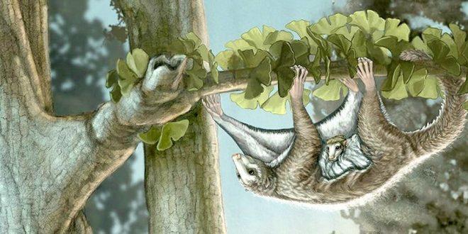 پستانداران گذشته