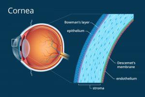 3 300x201 - رویکرد نانو بیوتکنولوژی و درمان بیماری های چشم (eye part 1)